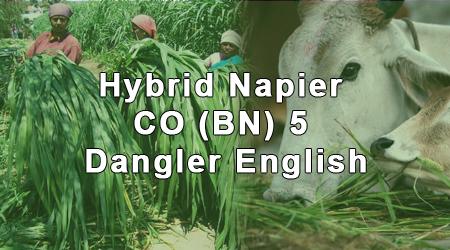 dangler-english